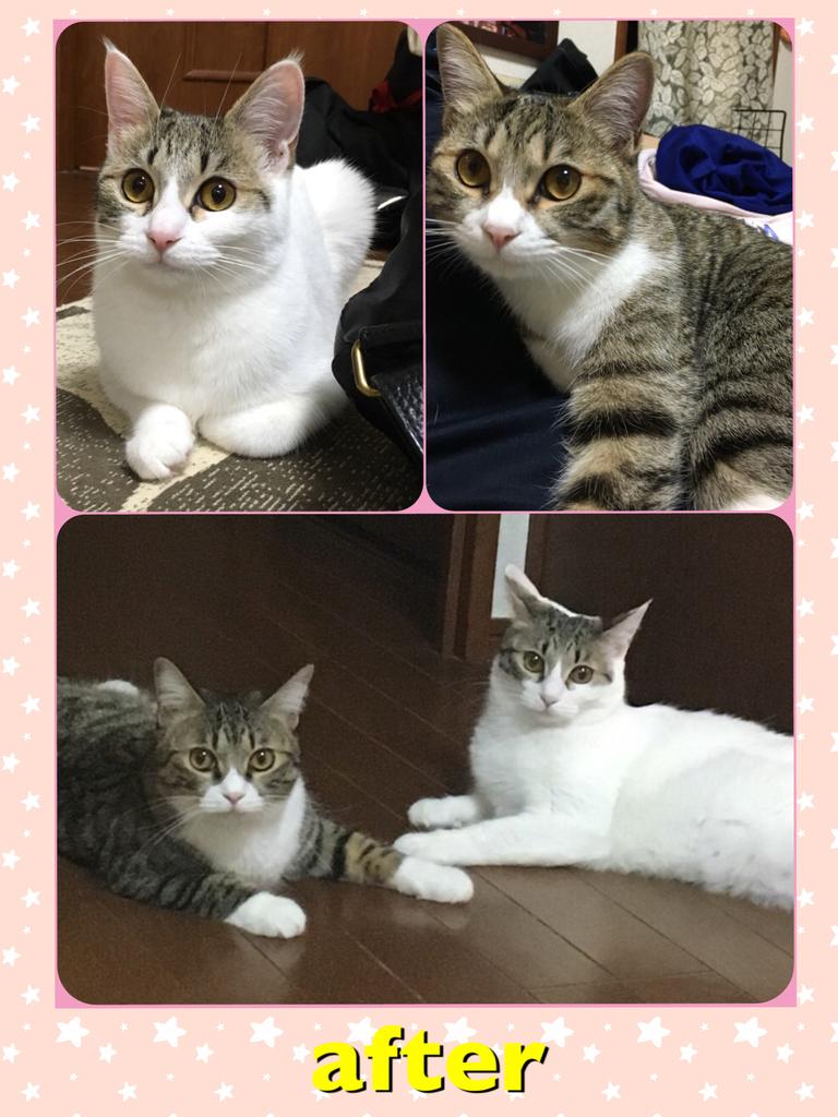 f:id:nozawa_clinic:20180830172054j:plain
