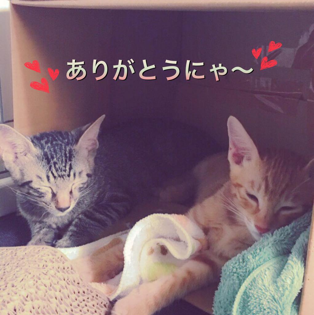 f:id:nozawa_clinic:20180914103516j:plain