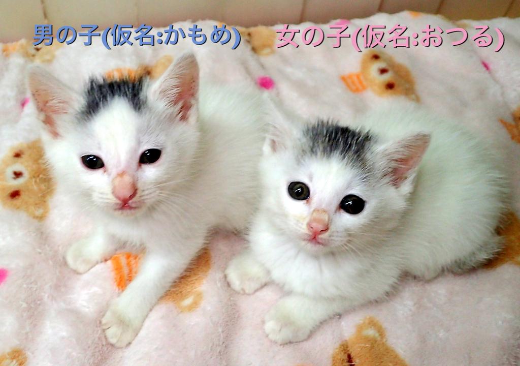 f:id:nozawa_clinic:20181016172549j:plain