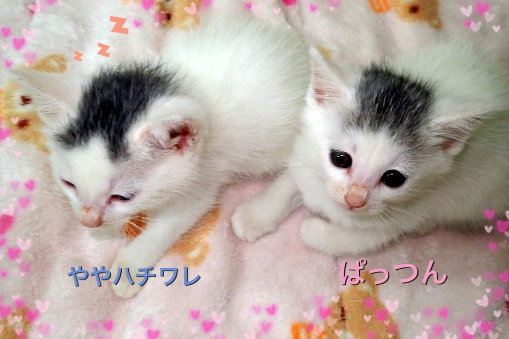 f:id:nozawa_clinic:20181016173525j:plain