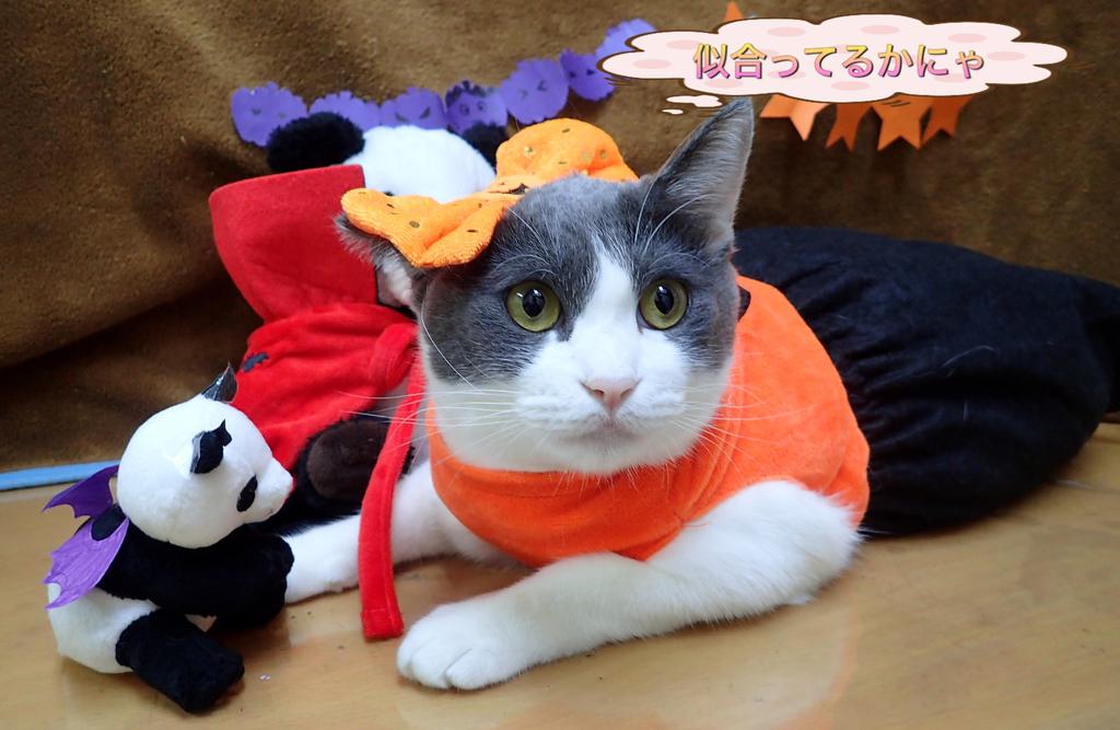 f:id:nozawa_clinic:20181031162245j:plain