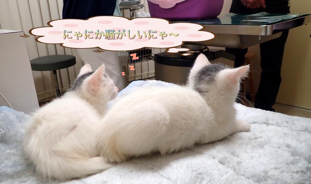 f:id:nozawa_clinic:20181106172801j:plain