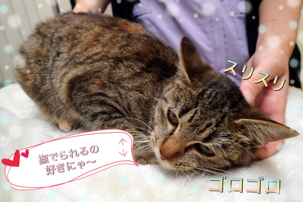 f:id:nozawa_clinic:20181206171156j:plain