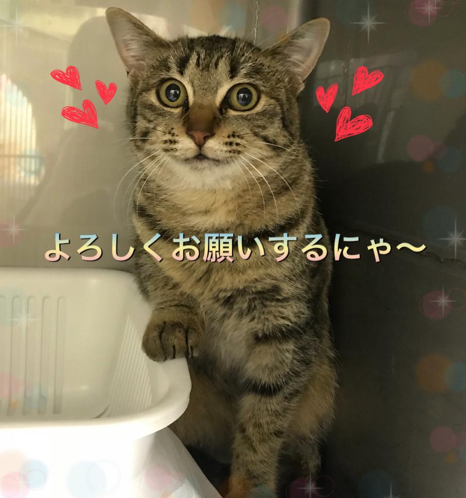 f:id:nozawa_clinic:20181206175143j:plain
