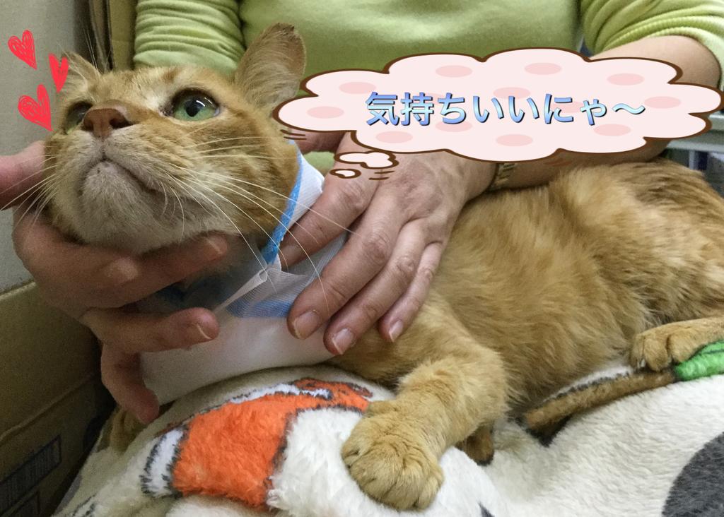 f:id:nozawa_clinic:20181229134645j:plain