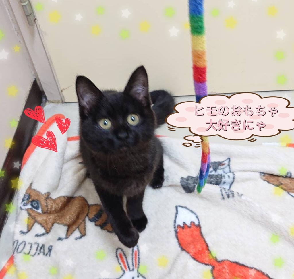 f:id:nozawa_clinic:20190226114540j:plain