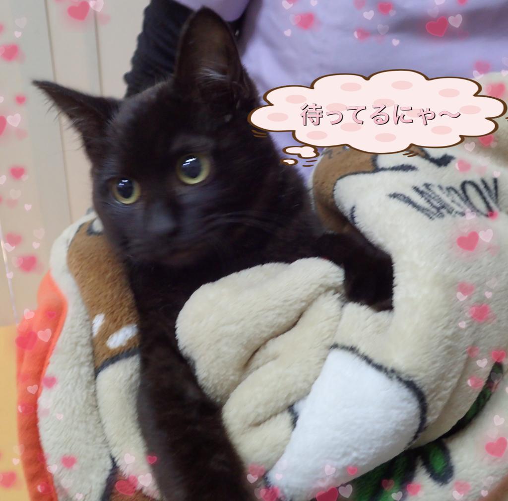 f:id:nozawa_clinic:20190226115225j:plain