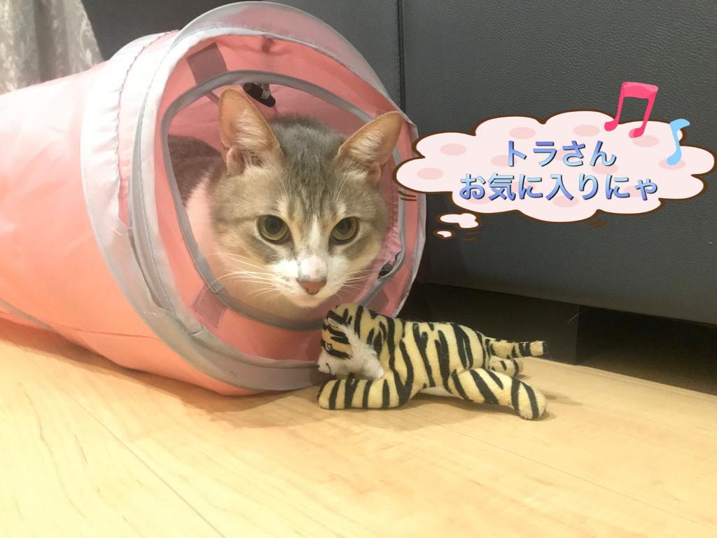 f:id:nozawa_clinic:20190301171645j:plain