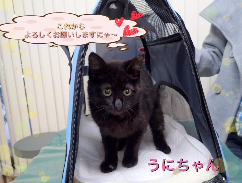 f:id:nozawa_clinic:20190312183232j:plain