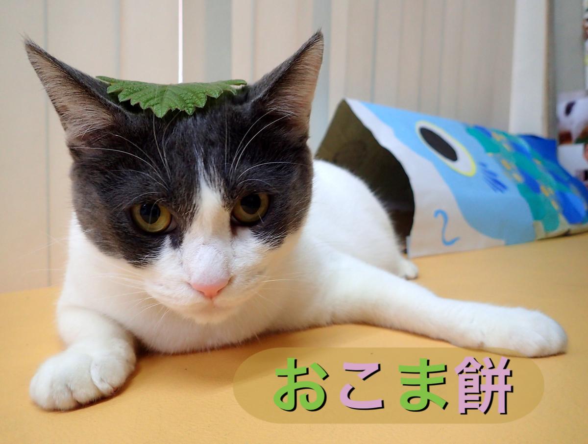 f:id:nozawa_clinic:20190426165716j:plain