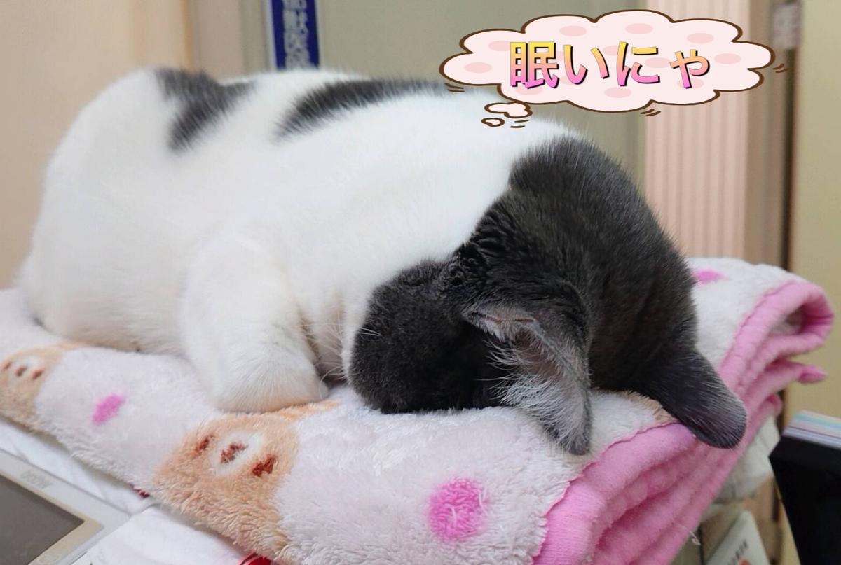 f:id:nozawa_clinic:20190521112241j:plain