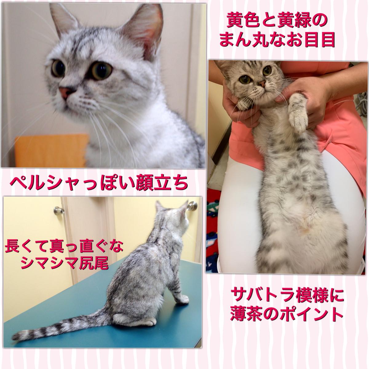 f:id:nozawa_clinic:20190521115155j:plain