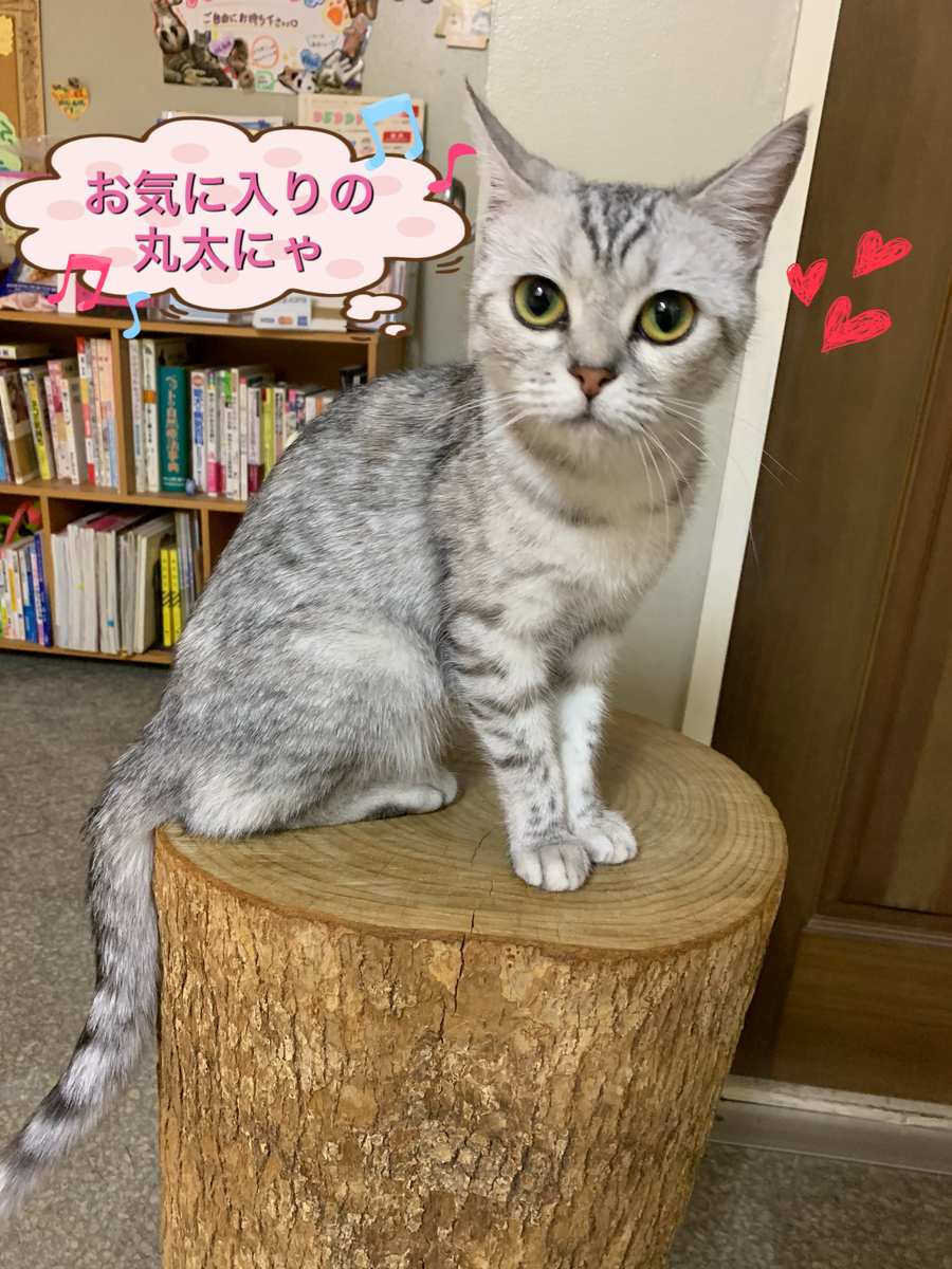 f:id:nozawa_clinic:20190528115310j:plain