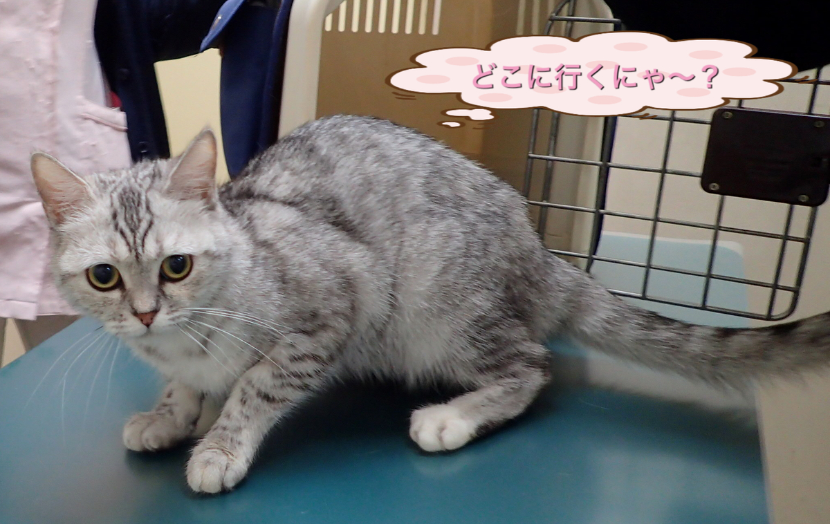 f:id:nozawa_clinic:20190605183434j:plain