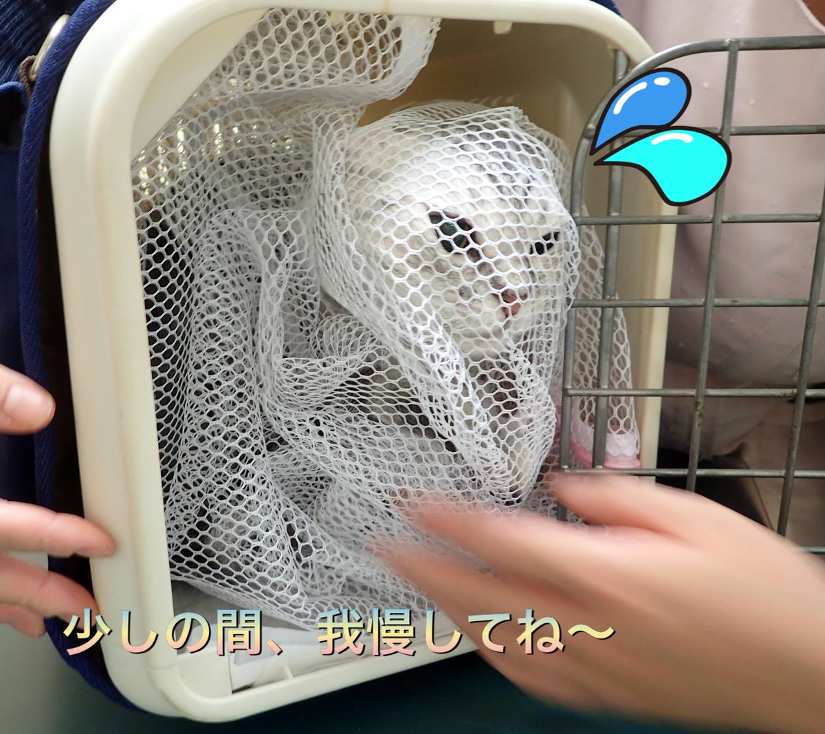 f:id:nozawa_clinic:20190605183957j:plain