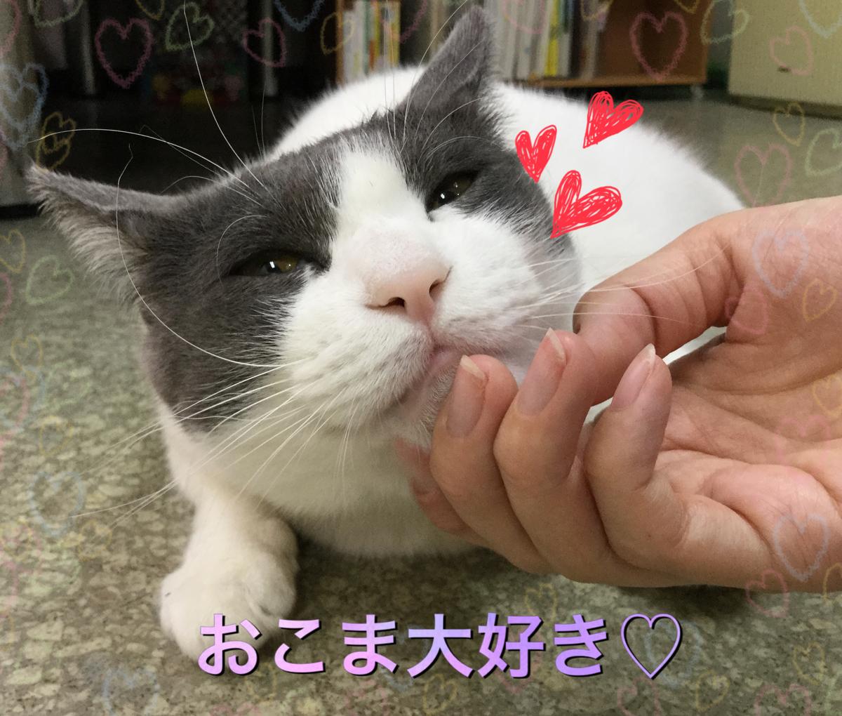 f:id:nozawa_clinic:20190607111031j:plain