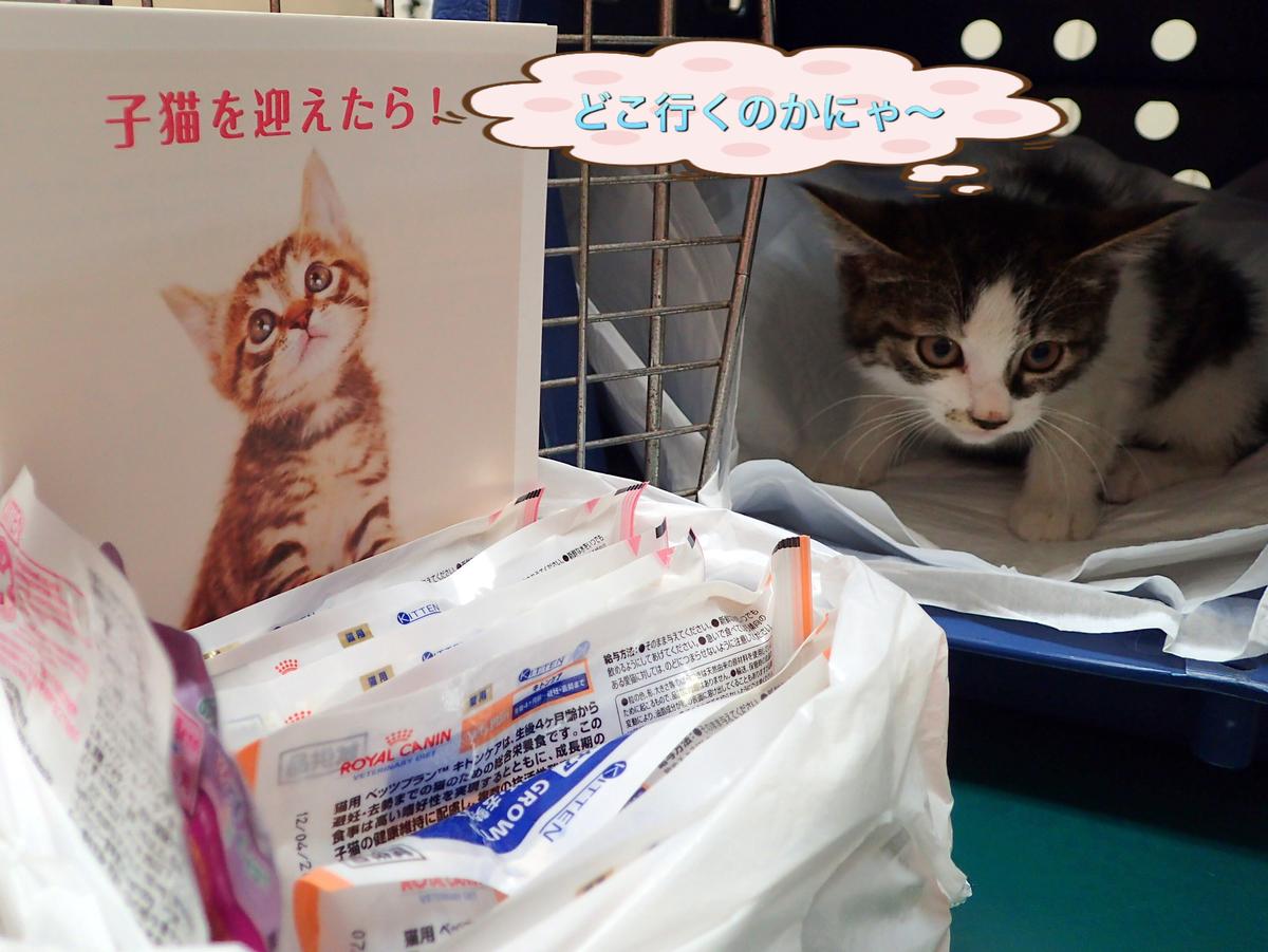 f:id:nozawa_clinic:20190611185647j:plain