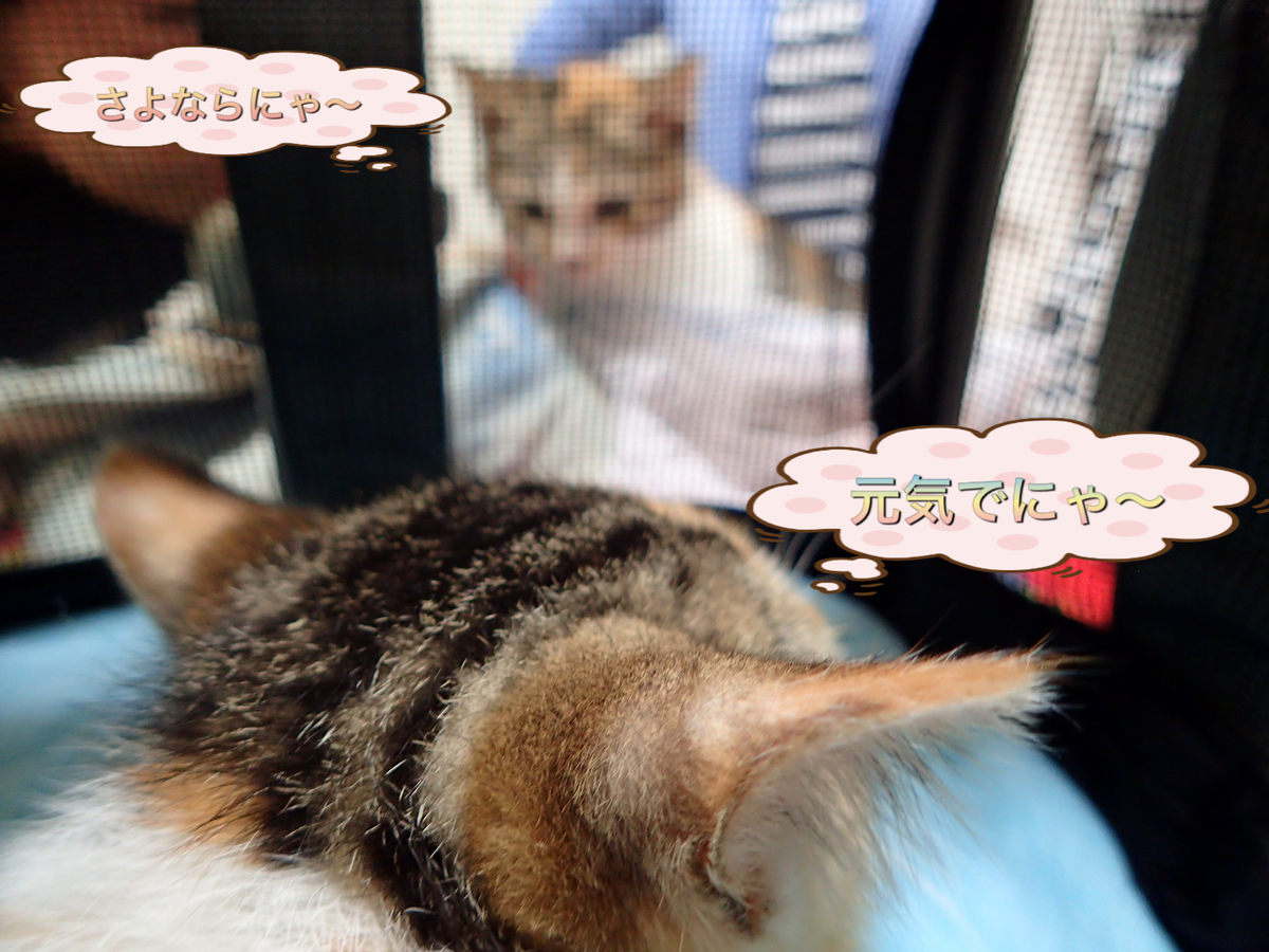 f:id:nozawa_clinic:20190611190307j:plain