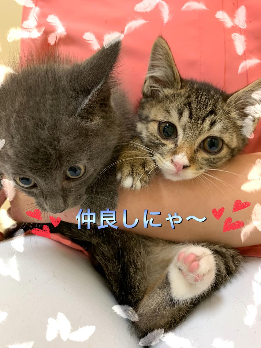 f:id:nozawa_clinic:20190703171515j:plain