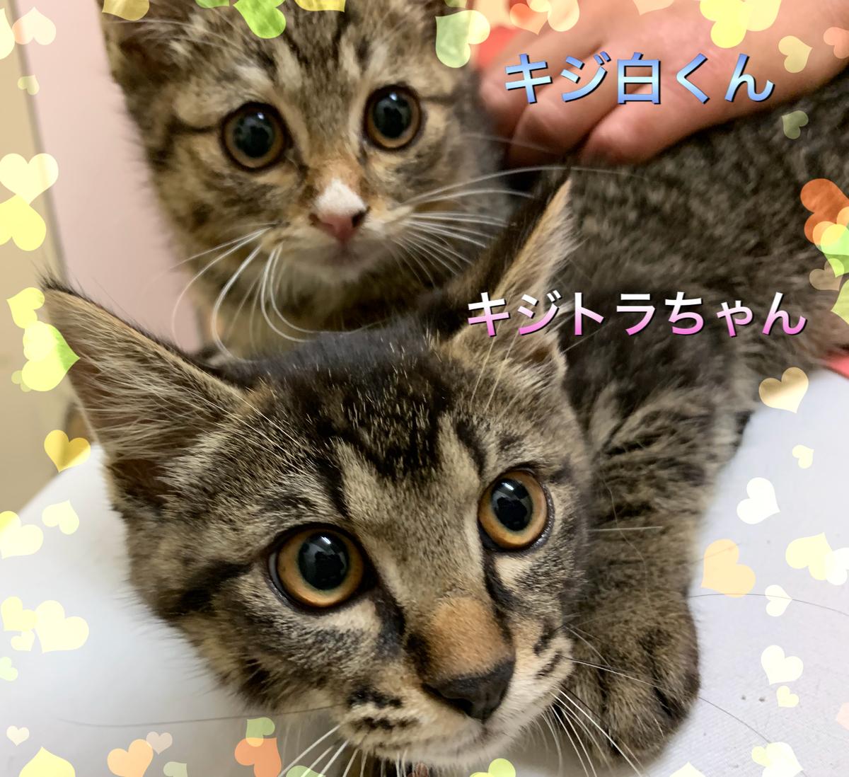 f:id:nozawa_clinic:20190703172133j:plain