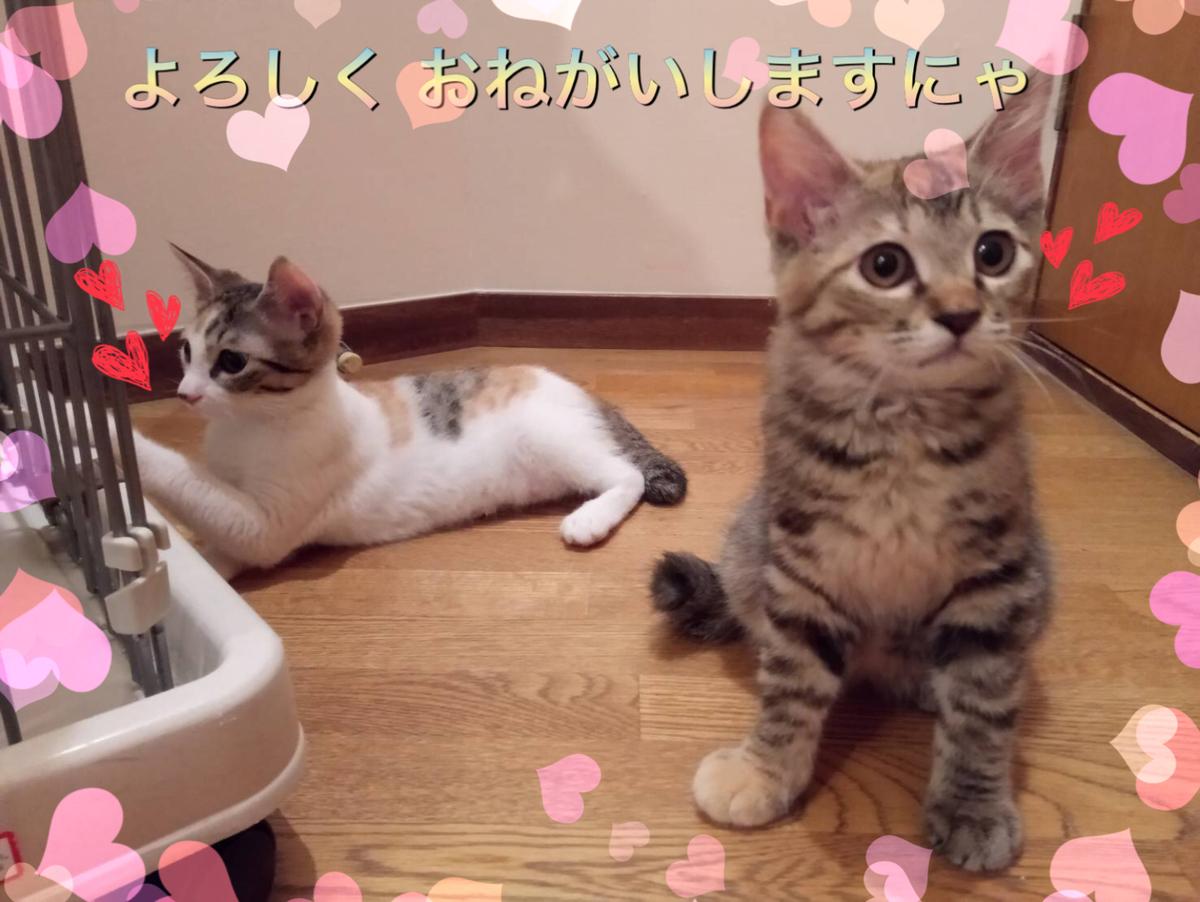 f:id:nozawa_clinic:20190710163336j:plain