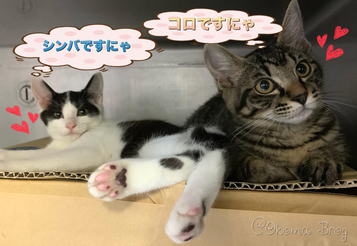 f:id:nozawa_clinic:20190730165647j:plain