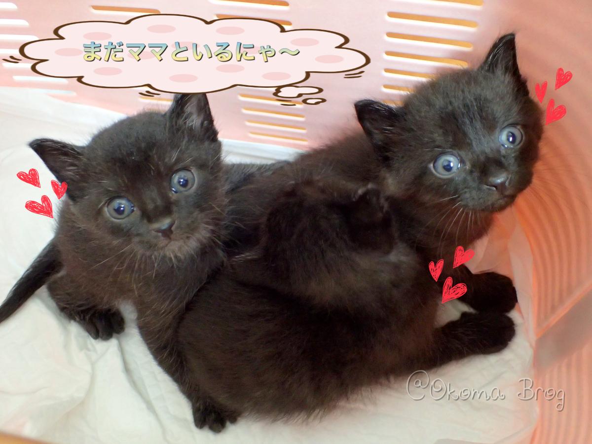 f:id:nozawa_clinic:20190730183541j:plain