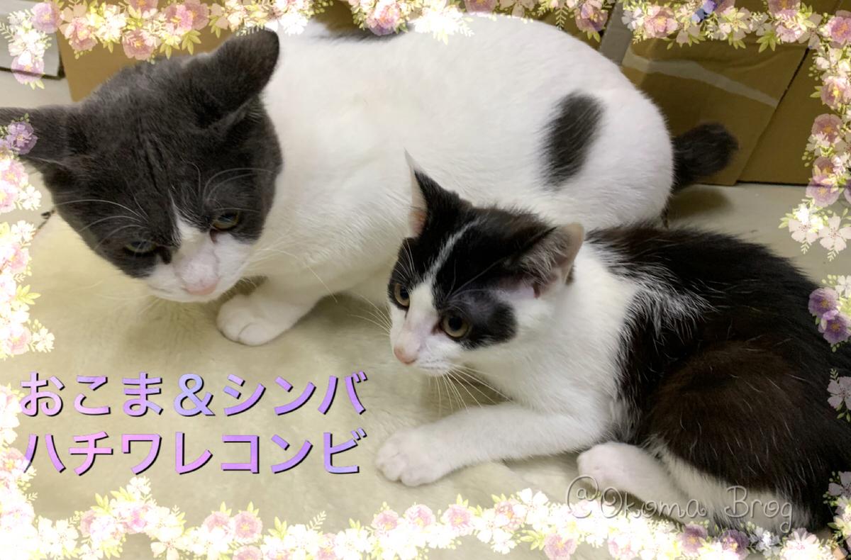 f:id:nozawa_clinic:20190731163941j:plain