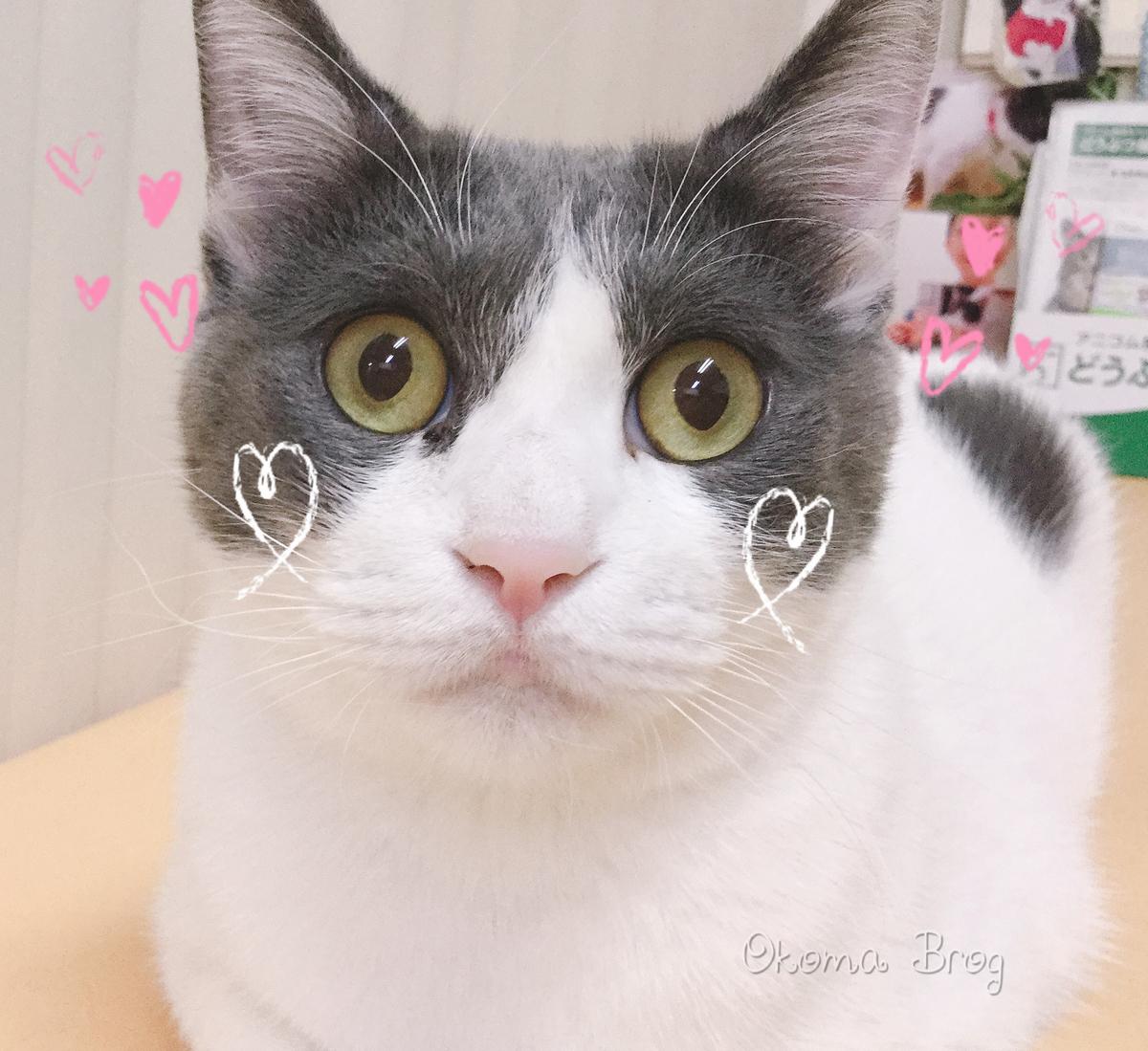 f:id:nozawa_clinic:20190809180817j:plain