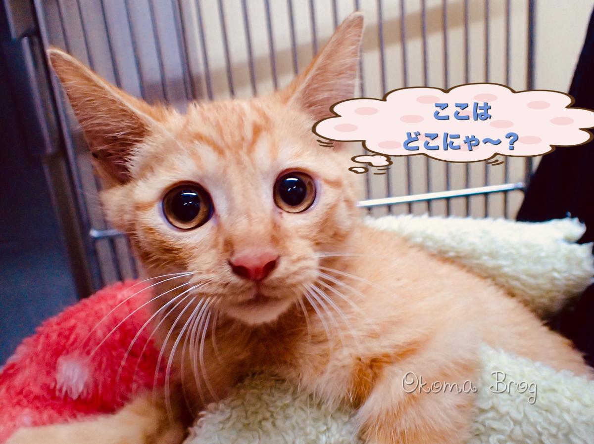f:id:nozawa_clinic:20190829170126j:plain