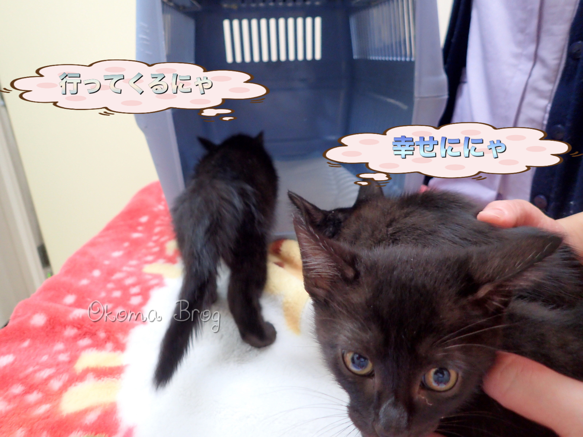 f:id:nozawa_clinic:20190911171853j:plain