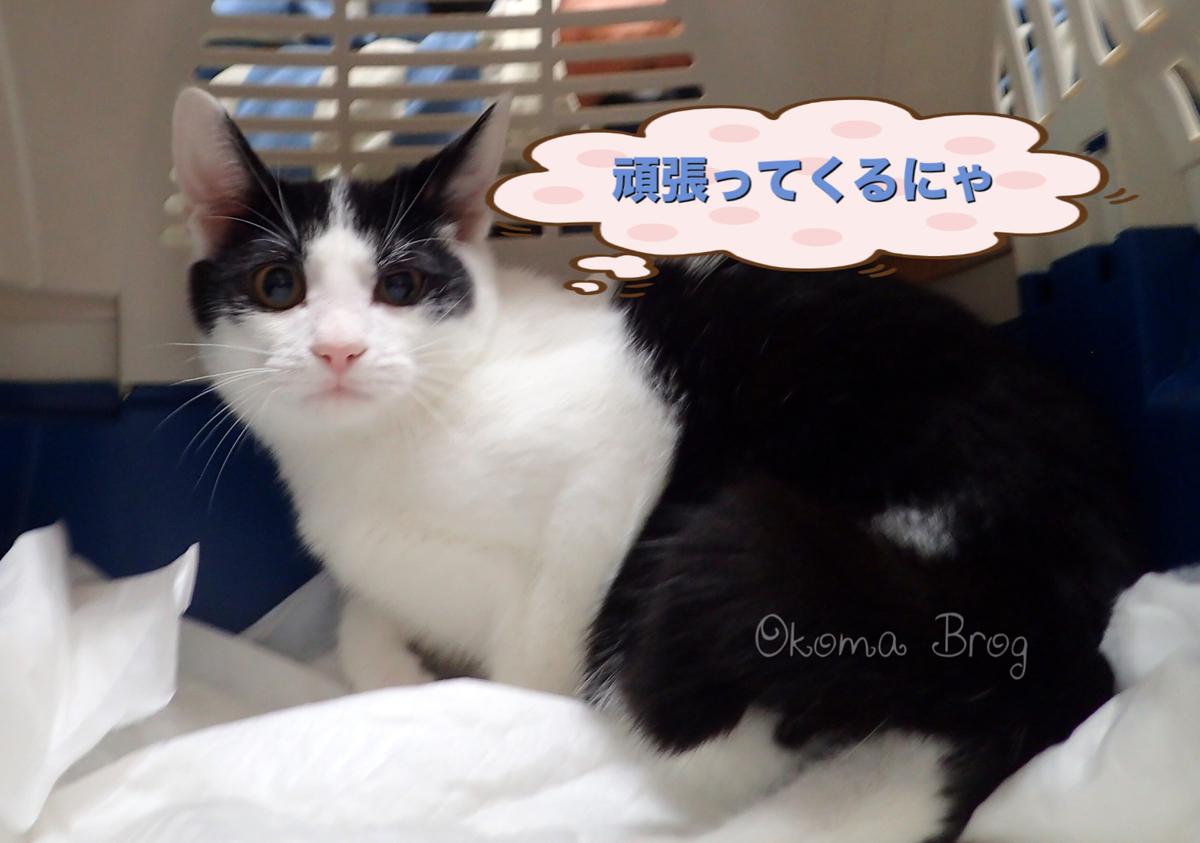 f:id:nozawa_clinic:20190911184010j:plain