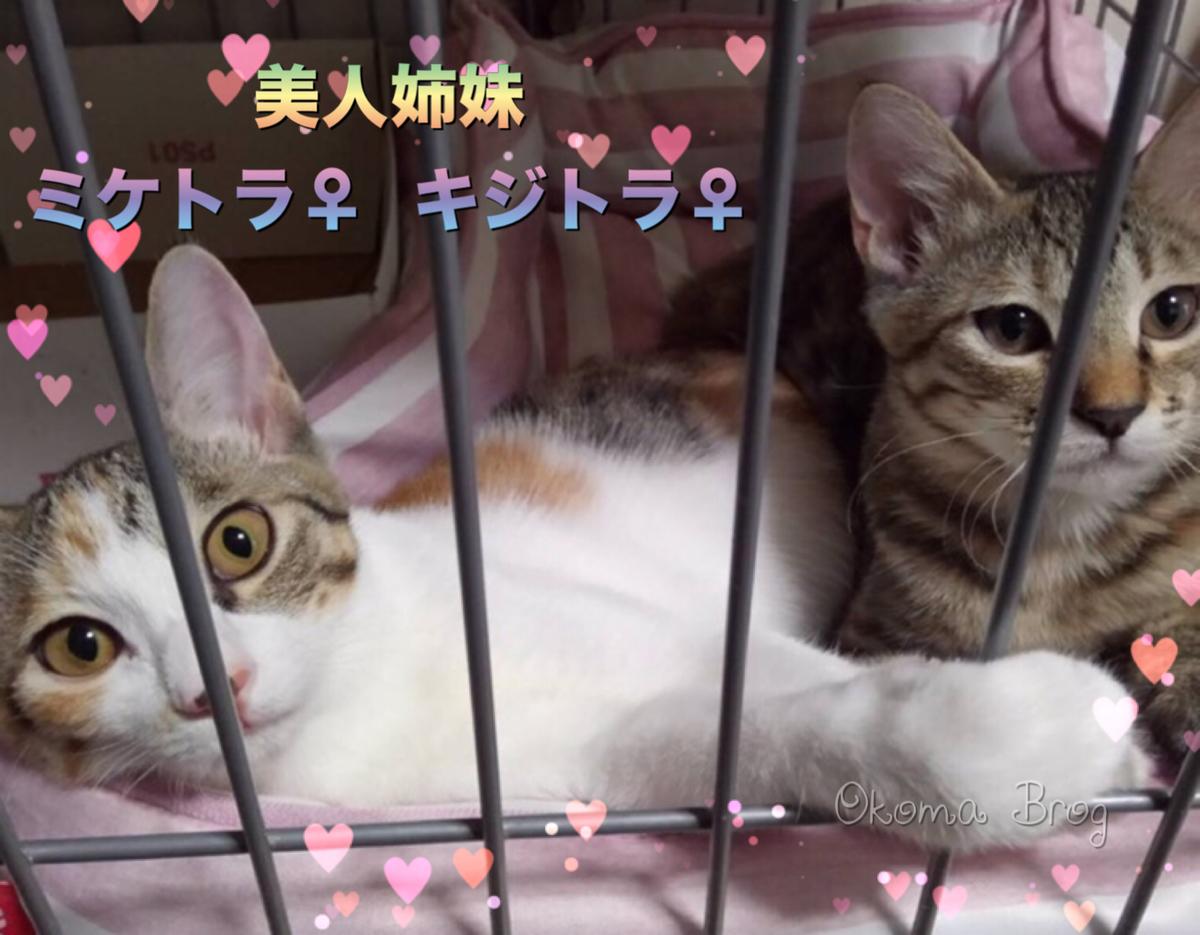 f:id:nozawa_clinic:20190912105630j:plain