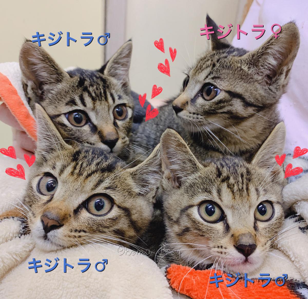 f:id:nozawa_clinic:20191018151755j:plain