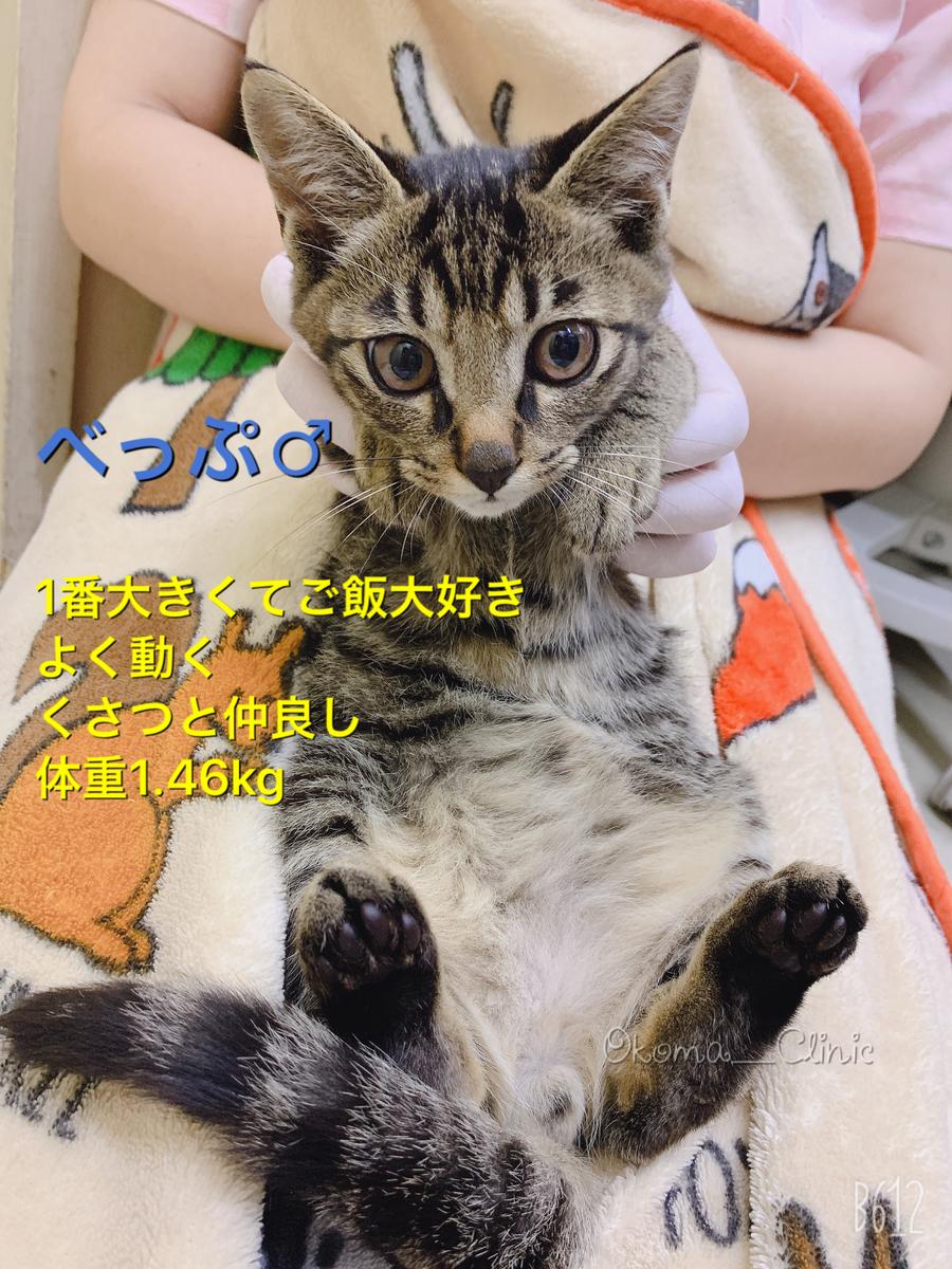 f:id:nozawa_clinic:20191018152312j:plain