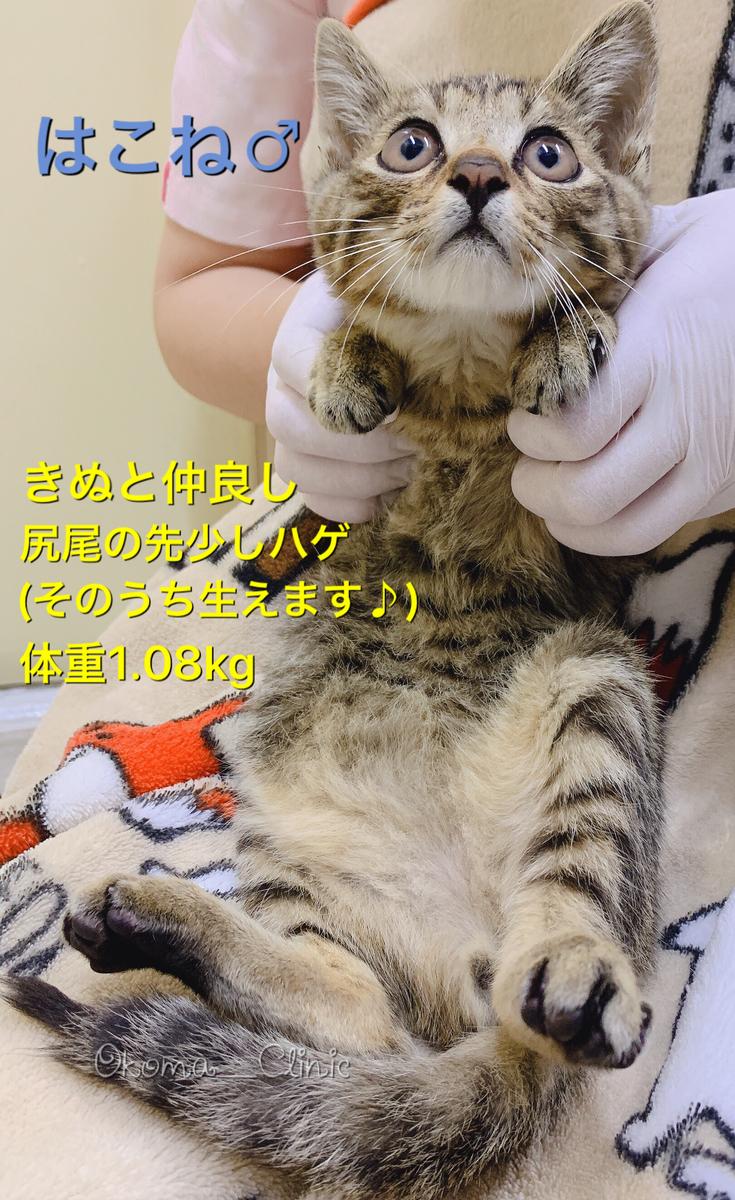 f:id:nozawa_clinic:20191018153101j:plain