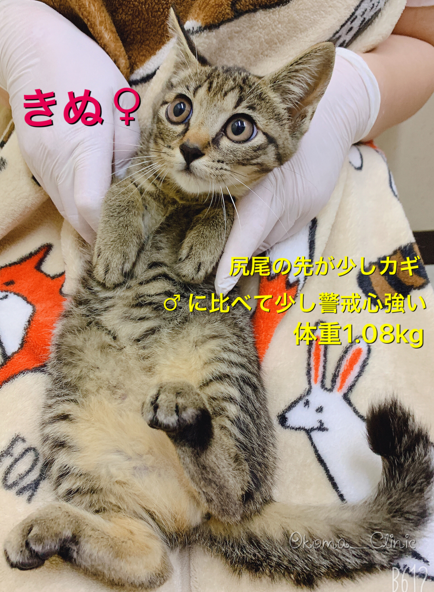 f:id:nozawa_clinic:20191018153931j:plain