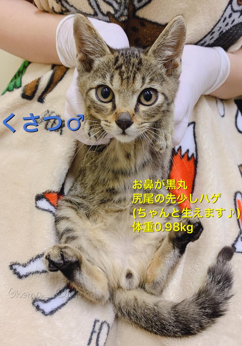 f:id:nozawa_clinic:20191018180449j:plain