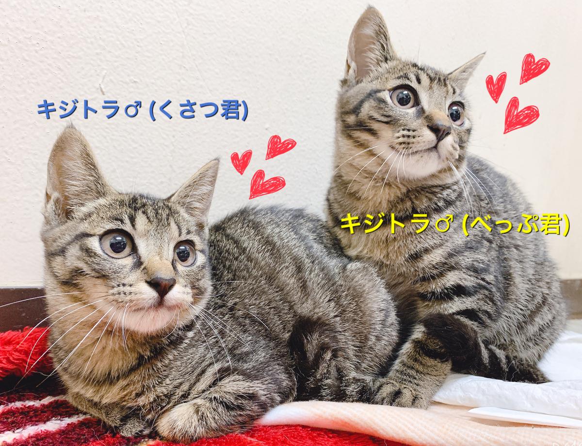 f:id:nozawa_clinic:20191122155424j:plain