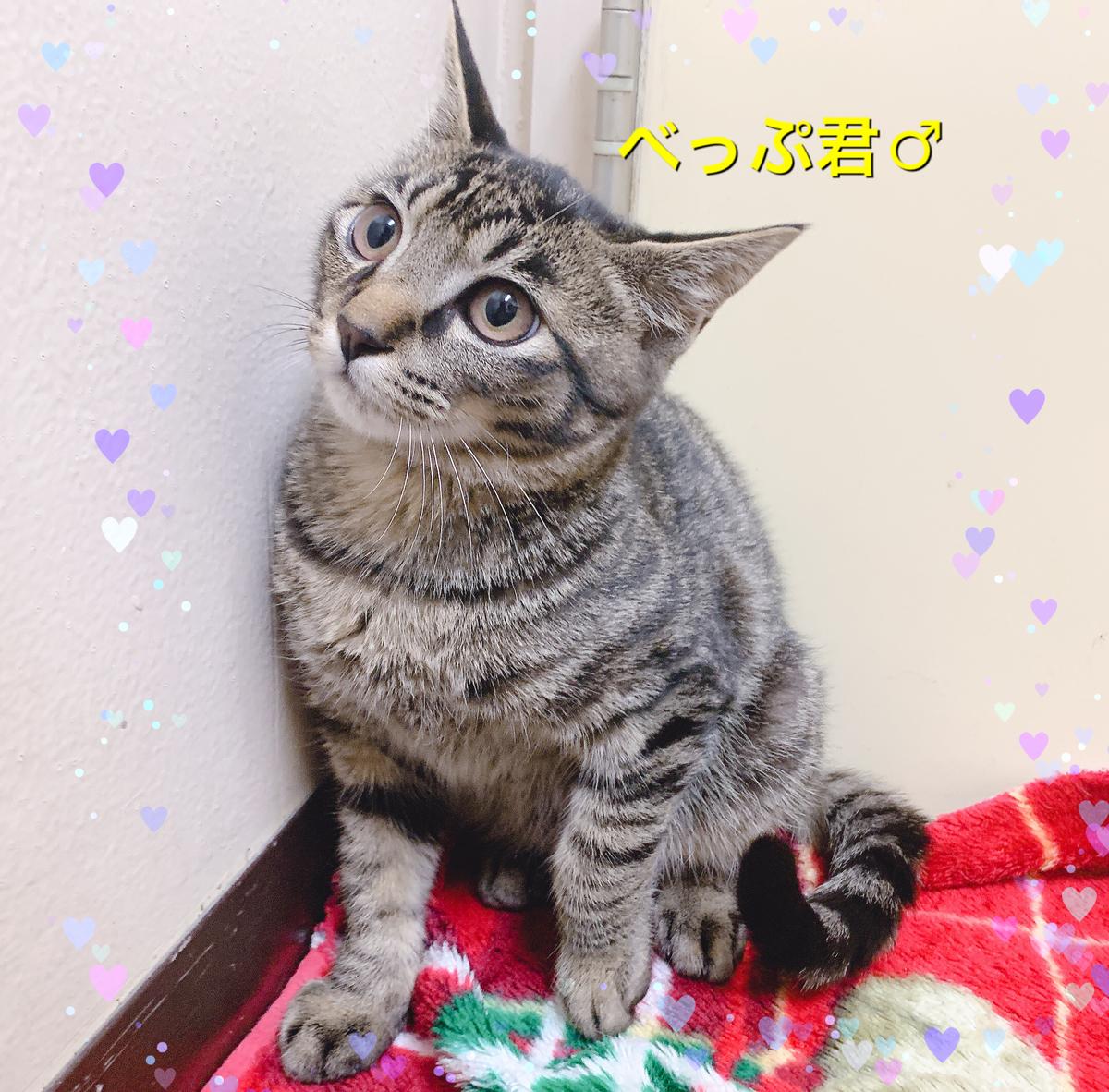 f:id:nozawa_clinic:20191122161431j:plain