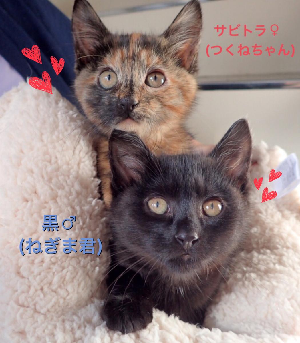 f:id:nozawa_clinic:20191122163444j:plain