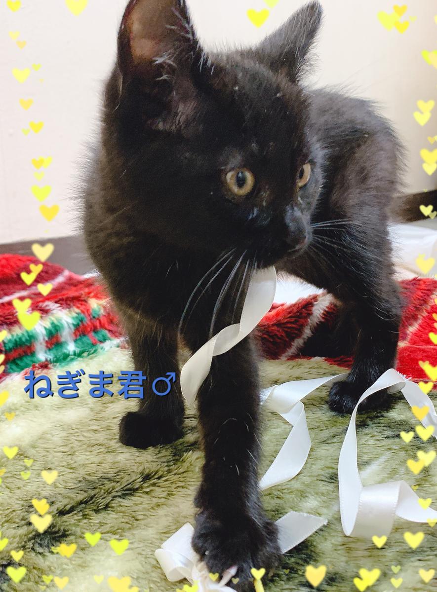 f:id:nozawa_clinic:20191122164954j:plain