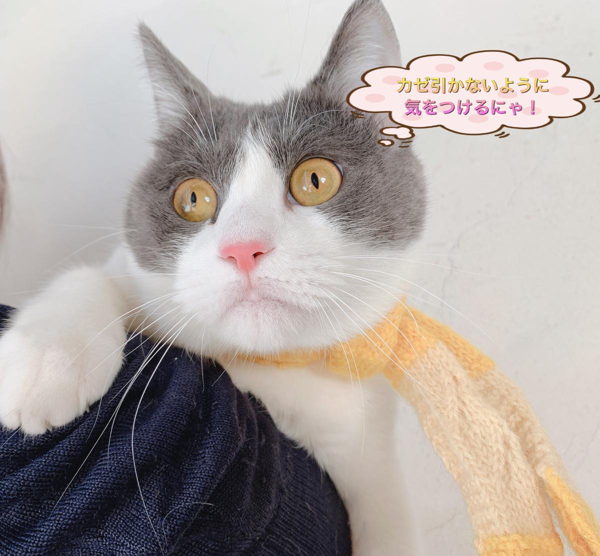 f:id:nozawa_clinic:20191122170754j:plain