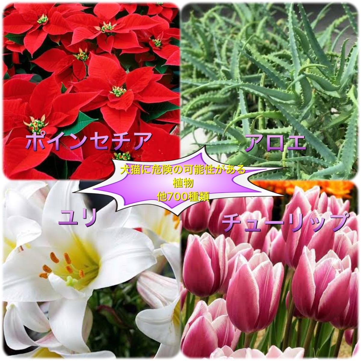 f:id:nozawa_clinic:20191225175751j:plain
