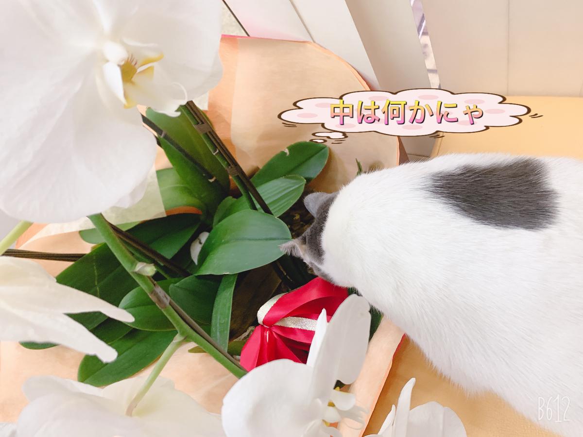 f:id:nozawa_clinic:20191225182540j:plain
