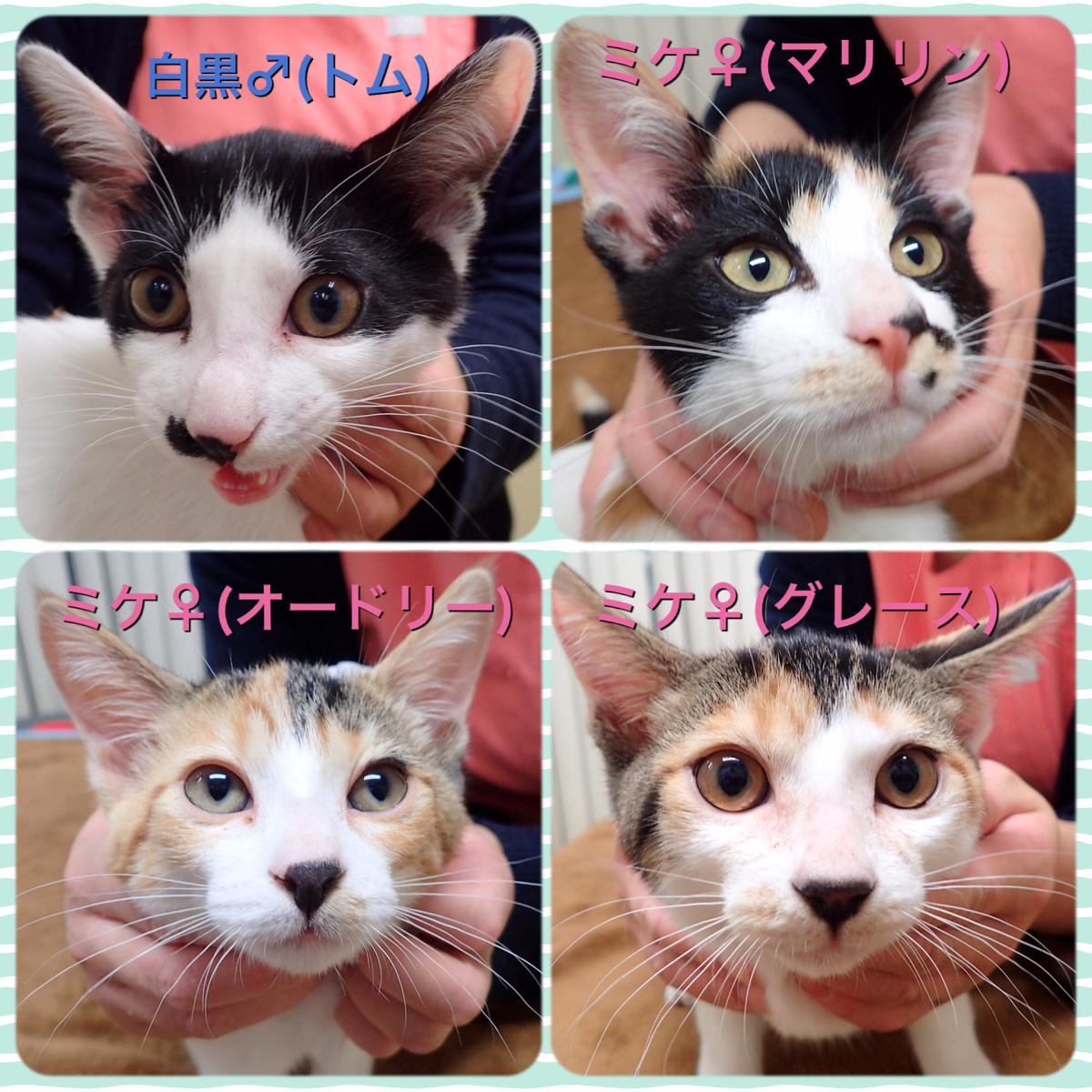 f:id:nozawa_clinic:20200130152740j:plain