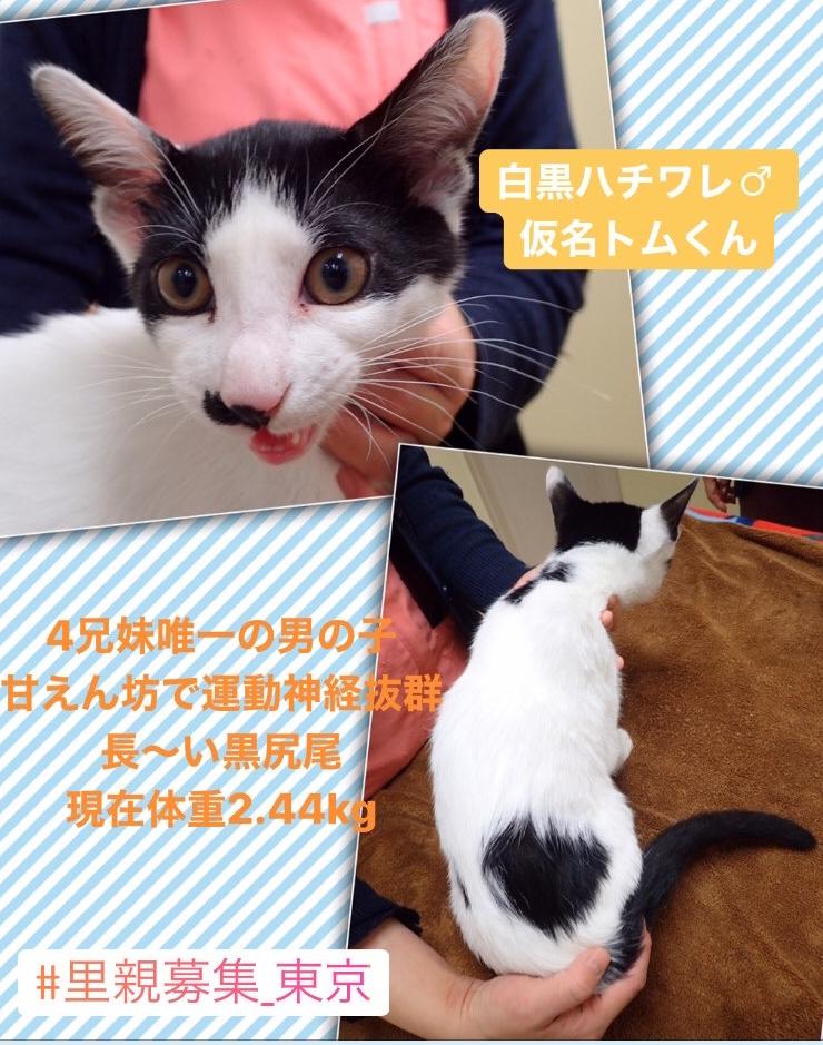 f:id:nozawa_clinic:20200130153338j:plain