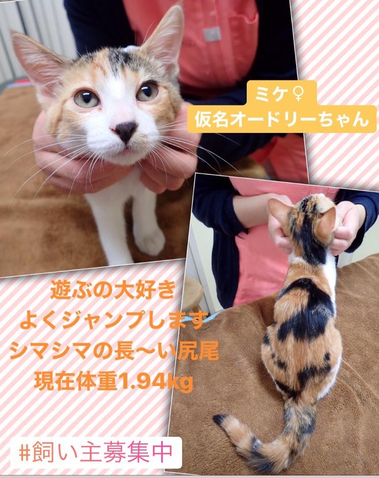 f:id:nozawa_clinic:20200130154005j:plain