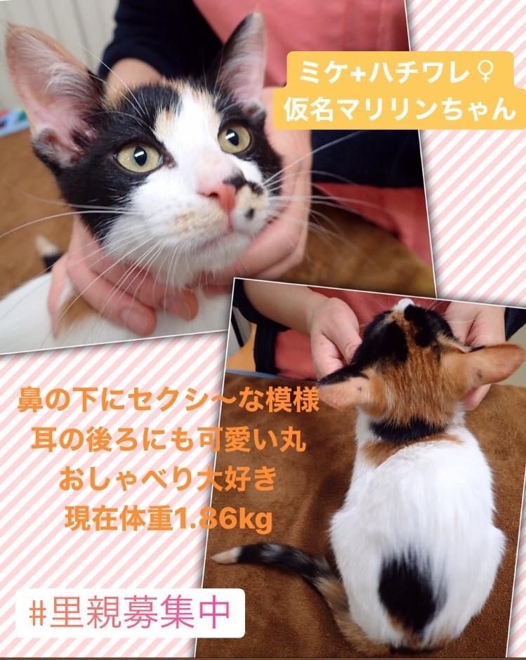 f:id:nozawa_clinic:20200130154144j:plain
