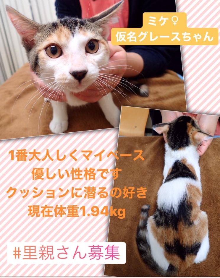 f:id:nozawa_clinic:20200130154652j:plain